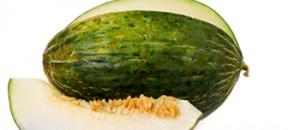 rock melon