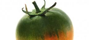 pomodoro new